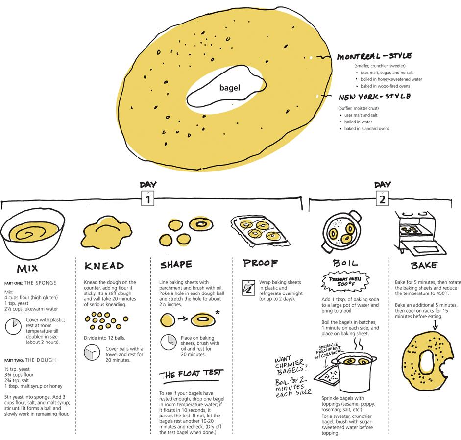 Bagel Infographic